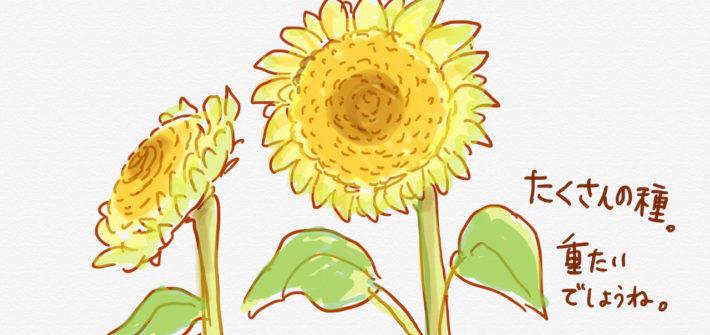 種がぎっしり詰まった、ひまわりの花のイラスト
