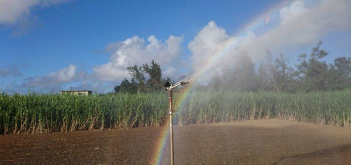 スプリンクラー散水で出来た虹